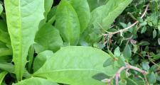 Gemüsepflanzen Paket